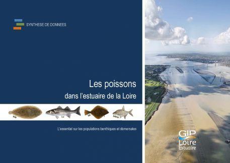 Les poissons dans l'estuaire de la Loire